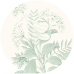 Sennespflanze | Ramend